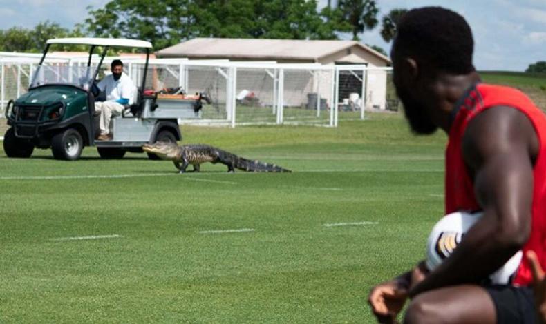 alligator toronto